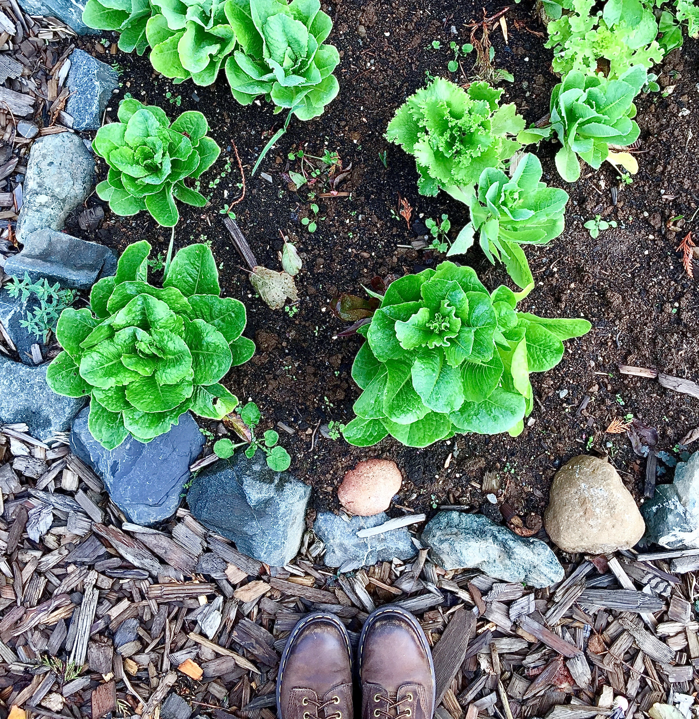 My shoes and lettuce from Bellingham WA
