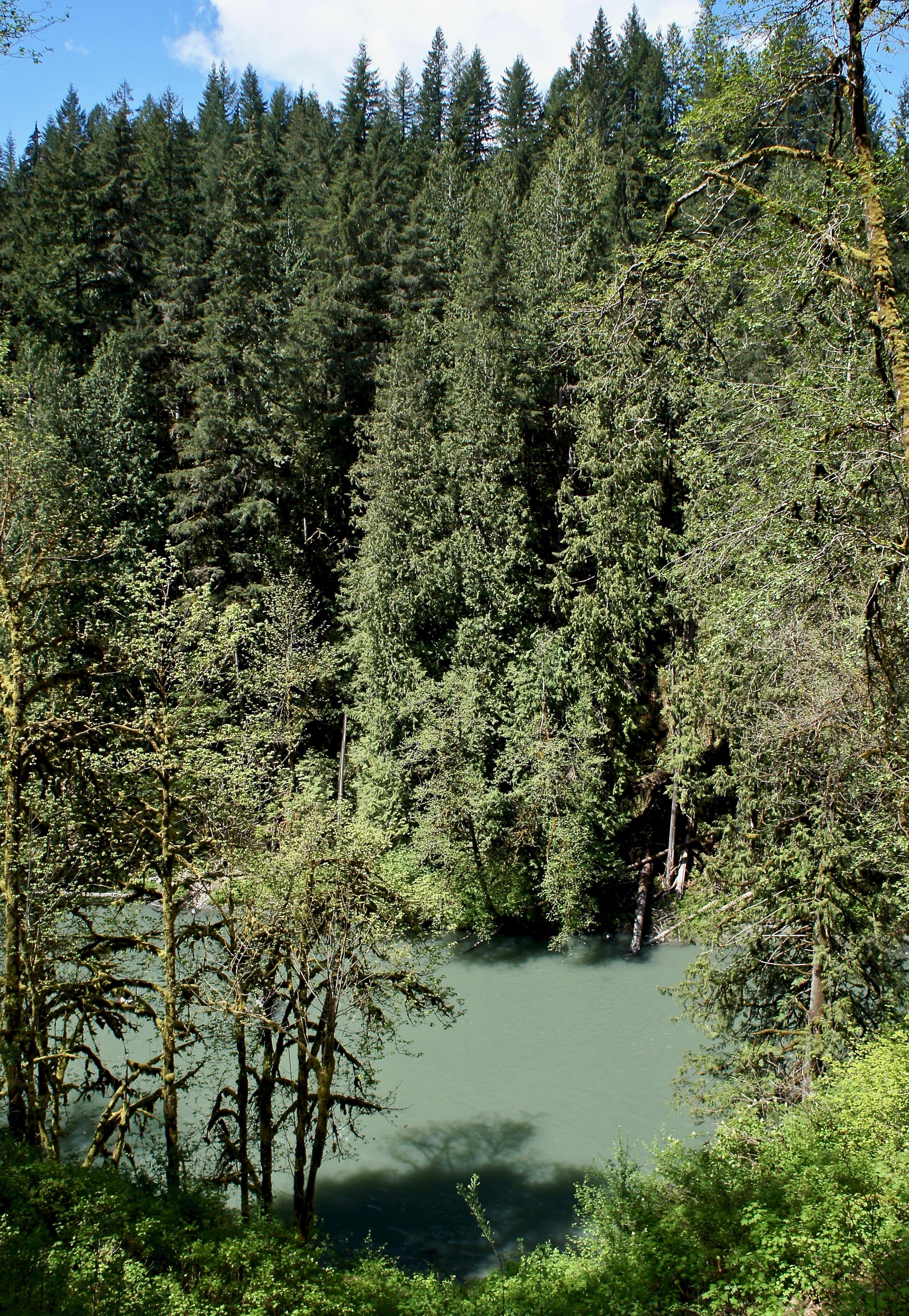 View of the Stillaguamish river.