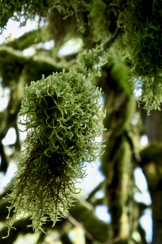 so much moss!