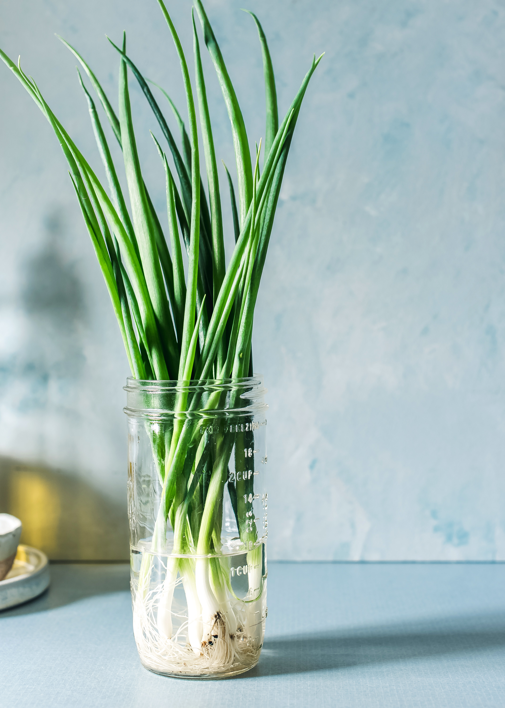Herbs: How to Find, Buy and Store Without Plastic – Kale & Compass